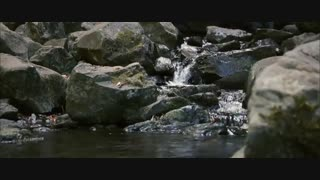 ویدیوی زیبایی از تولد دوباره طبیعت