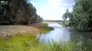 فرار و گریز شکارچیان و تمساح