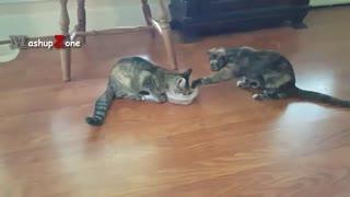 دعوا و بحث دو گربه سر غذا (دوبله _ کلیپ رحمان)