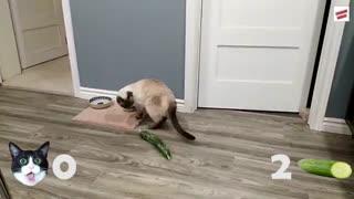 گربه در برابر خیار