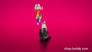 اسباب بازی گربه - پیشولانه