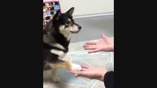 سگی که از تردستی می ترسد