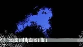 دنیای اسرار آمیز خفاش ها  Secrets and Mysteries of Bats