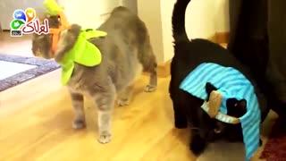 هالووین حیوانات