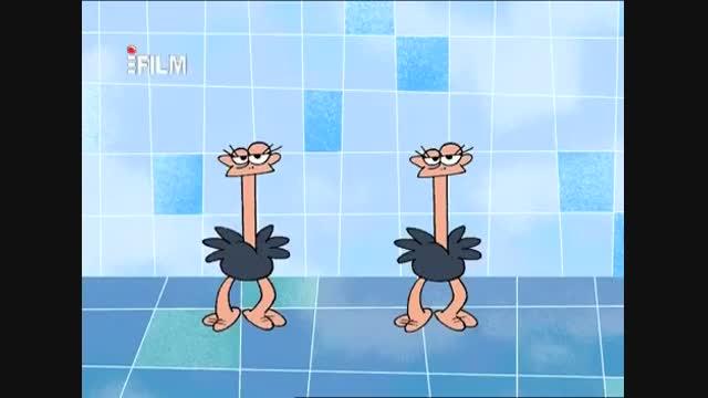 طنز حیات وحش، چرا شتر مرغ ها انقدر بی خاصیت هستند؟؟؟
