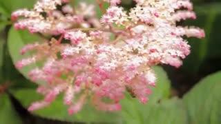 فایل باز | باغی بسیار زیبا در کشور کانادا