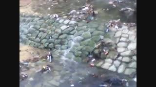 رودخانه ای پر از زباله در یکی از مرفه ترین نقاط تهران