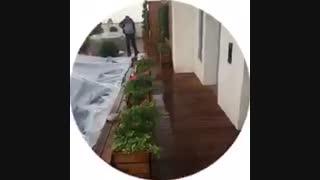 پروژه بام سبز شرکت آرین سعید