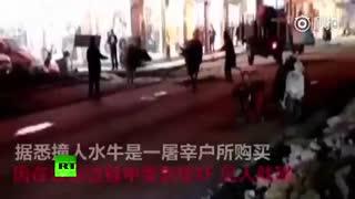 گاومیش فراری از قصابی به فروشگاه در چین حمله می کند