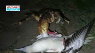 خرچنگی که مرغ دریایی شکار میکند