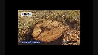 گزارش/قطع وحشیانه درختان چهل سال بلوار جمهوری اسلامی