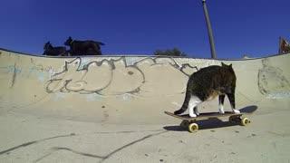 گربه اسکیت سوار