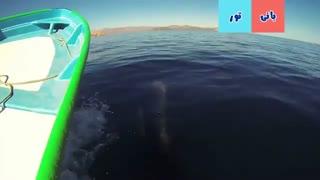 نهنگ درون آب دریا