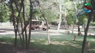 پارک سافاری بالی و پارک مارین | badsagroup