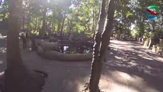 جنگل میمون اوبود | badsagroup