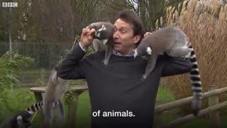 تهاجم لمورها به خبرنگار بی بی سی