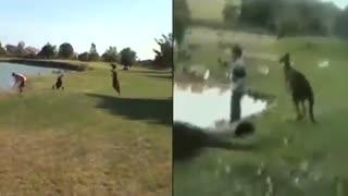 بازسازی لحظه حمله یک کانگورو