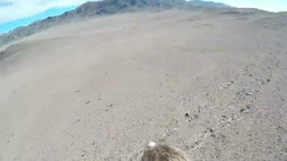 شکار روباه از زاویه دید عقاب