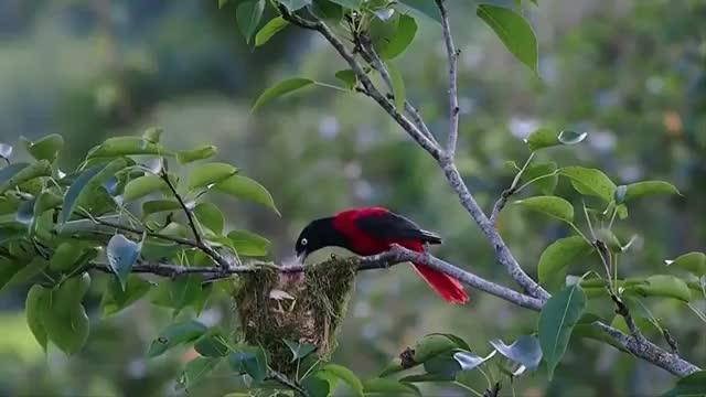 فیلم مستند حیات وحش استرالیا