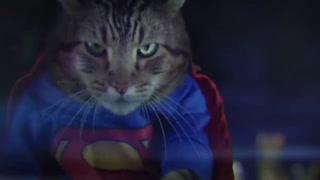 فیلم بتمن و سوپرمن ولی با گربه