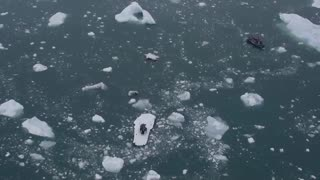 موزیک ویدیو Ludovico Einaudi Elegy for the Arctic