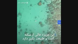 در حوالی یکی از جزیرههای مرجانی خلیج فارس