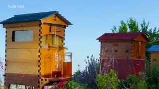 تولید عسل به سبک قرن 21