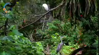 جزیره Ilha Grande در  ایالت ریودوژانیرو | دکتر داوودیان