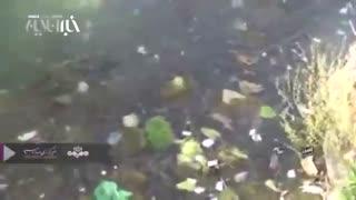 جمعآوری ۲ تُن سبزه و زباله سیزدهبهدر از رودخانه کرج