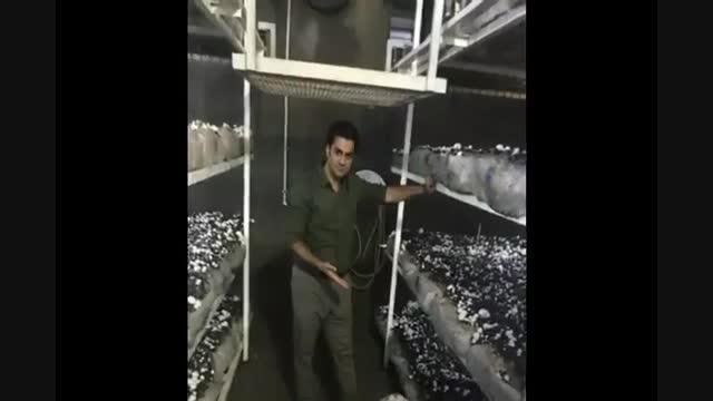 پرورش قارچ- بیماری قارچ -آموزش پرورش قارچ