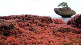 به دنیا آمدن میلیاردها بچه خرچنگ قرمز در جزیره کریسمس
