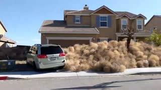 حمله بوته های خشک به شهرکی در کالیفرنیا