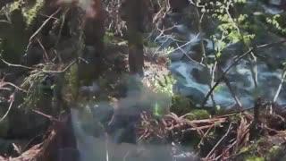 زیباترین فیلم مستند ماهیگیری قزل الا با قلاب