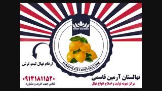 نهال فروشی لیمو ترش در نهالستان لیمو ترش قاسمی 09141811520