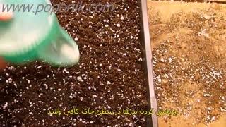 کاشت پیاز از بذر (زیرنویس فارسی)