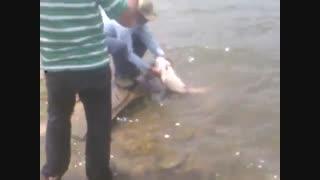 اموزش صید کپو 15 کیلیویی با قلاب