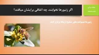 زمان و مکان خواب زنبورهای عسل (خوابیدن زنبورها)