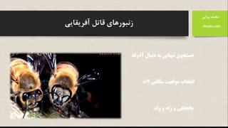 زنبور قاتل آفریقایی (عسل آهوتا)