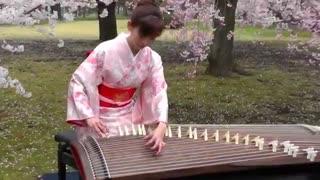 آلت موسیقی ژاپن به اسم کوتو . استاد Sakura