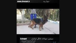 شرکت سرزمین حیوانات خانگی
