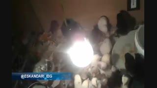 فیلم از جوجه کشی موفق با دستگاه 96 تایی