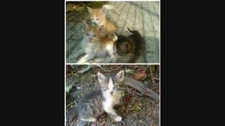 گربه هام