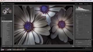 عکاسی خلاق از گل ها با نورپردازی موضعی