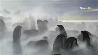 تناقضات طبیعی حیات وحش با دوبله فارسی
