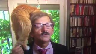 گربه تاریخدان لهستانی با ظاهرشدن در مصاحبه تلویزیونی مشهور شد