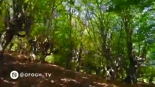 هوای تازه - جنگل های عباس آباد - کلاردشت