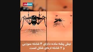 پشه چگونه باعث انتقال بیماری به انسان میشود؟