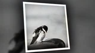 در پیش کسی درد دل تنگ نگفتم: شاعر فردوس اعظم با خوانش بانو نجوا