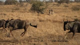حیات وحش و طبیعت آفریقای جنوبی