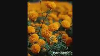 چشم نوازی زیبایی های تایلند | چارتر123